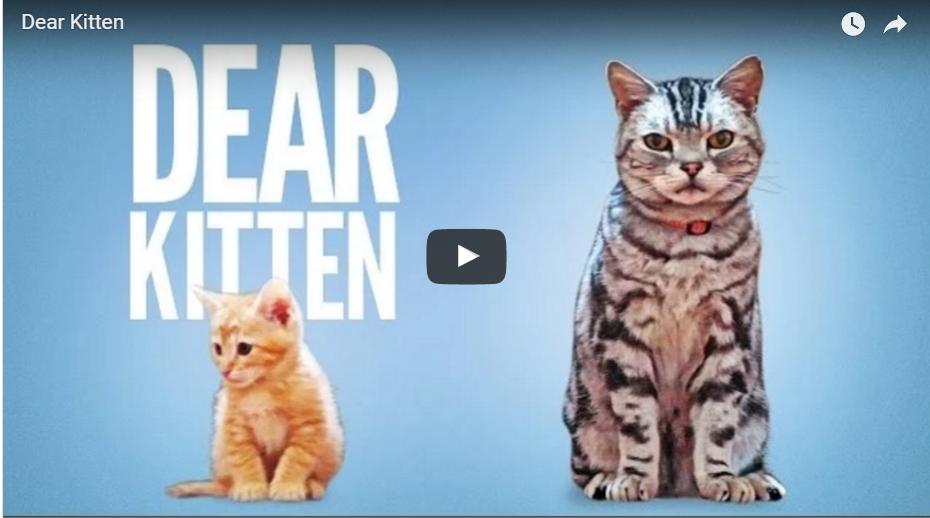 Dear Kitten: The marketing power of cat videos